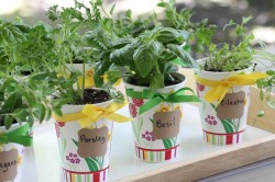 Small Of Building An Herb Garden