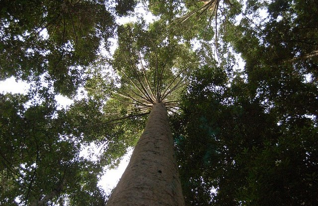 Pemandangan hutan di Indonesia. Foto oleh Dede Rohadi/CIFOR