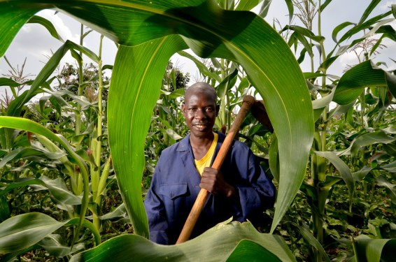 A maize farmer in Kisumu, Kenya. Photo courtesy of Neil Palmer (CIAT).