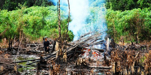 Forest fire in Indonesia, 2007.