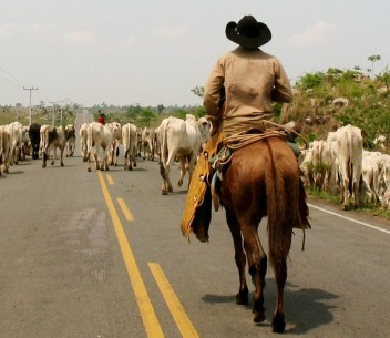 Cattle ranching is a major driver of deforestation in Brazil. Pablo Pacheco (CIFOR)