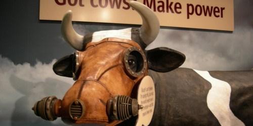 Seekor sapi berukuran sedang mengeluarkan 600 liter metan per hari melalui bersendawa dan ekshalasi (membuang napas). Apakah membabat hutan untuk tempat penggembalaan ternak merupakan kutukan ganda untuk perubahan iklim? Jill Matsuyama