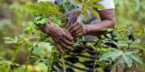 Menangani berbagai pendorong pembabatan hutan, seperti misalnya pertanian, akan segera menghasilkan berkurangnya emisi dari hutan. Ollivier Girard/CIFOR