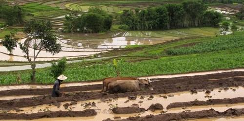 Tujuan Pembangunan Berkelanjutan perlu mengakui bahwa kehutanan adalah lebih luas daripada perlindungan lingkungan - itu juga berkaitan dengan kemiskinan, ketahanan pangan, bentang alam tangguh dan pertumbuhan hijau. Mindy McAdams