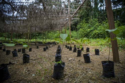 Tree planting by smallholder farmers in Cameroon could boost on-farm timber production and help avert forest destruction. Ollivier Girard/CIFOR
