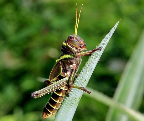 More than 1,900 insect species form part of the traditional diets of at least 2 billion people, providing a nutritious food source high in protein, vitamin, fiber and mineral content, scientists have said. CIAT/Neil Palmer