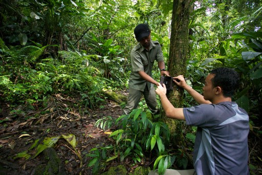 A CIFOR scientist and national park staff set up a camera trap to monitor leopard populaitons in west Java.