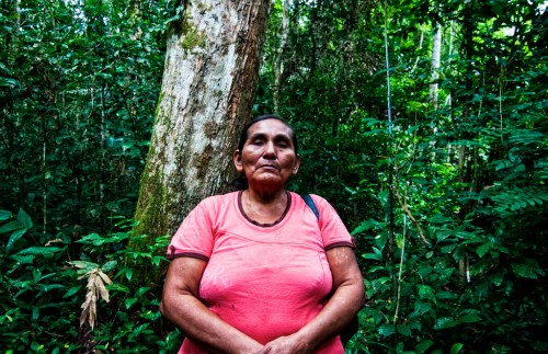 Felicitas Ramirez Surco holds a Brazil nut concession of 242 hectares near Puerto Maldonado and has allowed CIFOR scientists to conduct research there. Marco Simola/ CIFOR