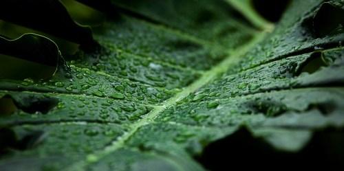 Jika tidak ada pohon di hutan yang luas seperti di Kongo Basin, proses terjadinya hujan akan terganggu.