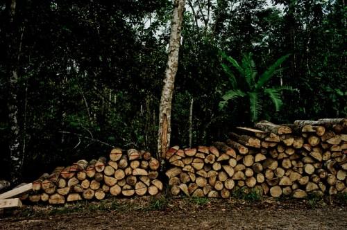 Menentang replikasi-semu menjadi penting untuk secara akurat menaksir keragaman hayati dalam hutan tebangan serta secara efektif menyeimbangkan konservasi dengan produksi kayu di bentang alam hutan tropis, kata Douglas Sheil, mitra senior CIFOR. CIFOR//Tomas Munita