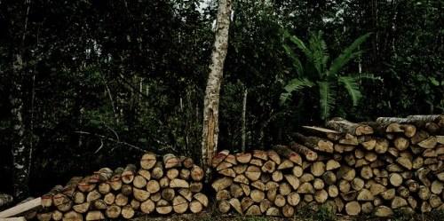 Menentang replikasi-semu menjadi penting untuk secara akurat menaksir keragaman hayati dalam hutan tebangan serta secara efektif menyeimbangkan konservasi dengan produksi kayu di bentang alam hutan tropis, kata Douglas Sheil, mitra senior CIFOR. Foto: Tomas Munita/ CIFOR