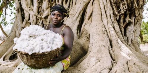 woman-cotton-500x332
