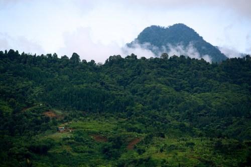 Vista del Parque Nacional Halimun-Salak, al Este de Java, Indonesia. Fotografía de Mokhamad Edliadi/CIFOR