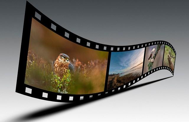 Dengan keuntungan besar dan dampak mendunia, haruskah pembuat film alam liar membayar untuk keragaman hayati tempat mereka bergantung? Steve McLaren