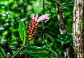 Quienes diseñan proyectos de conservación en ecosistemas naturales enfrentarán el reto de facilitar la migración de especies vegetales, dijo Bruno Locatelli, experto en silvicultura e hidrología que trabaja con el Centro para la Investigación Forestal Internacional y con Investigación Agrícola para el Desarrollo.