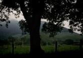 """Muchos países con bosques experimentan presiones similares a las que se enfrentó la región de Mato Grosso, pero simplemente no cuentan con sistemas de gobernanza para lograr el mismo éxito"""", dijo Ruth DeFries, científica del Instituto de la Tierra de la Universidad de Columbia, en Nueva York. Fotografía de Filipe Fonseca"""