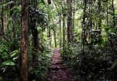 Peru mengalami pertumbuhan ekonomi dan terus bertumbuh yang terus akan berlangsung – dengan pengorbanan Amazon Peru, kata Mary Menton dari Pusat Penelitian Kehutanan Internasional (CIFOR).