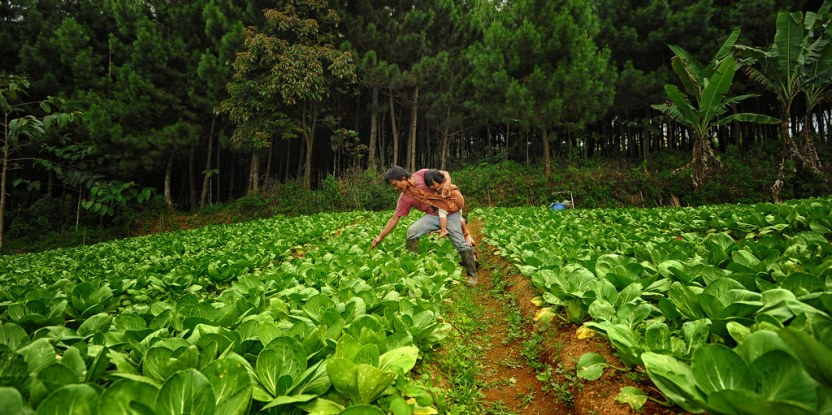 "Cabbage plantation in West Java, Indonesia. What will the next ""road map"" for global development look like? Meetings this week in New York could be decisive in charting it — and in determining where forests fit into it. CIFOR photo"