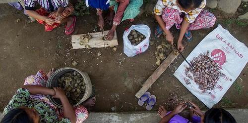 Kaum perempuan, warga desa Lubuk Beringin, propinsi Jambi memotong-motong buah kacang, hasil pertanian utama desa mereka. Foto oleh Tri Nugroho/CIFOR