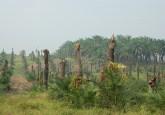 """""""Es indispensable contar con una variedad de especies de plantas, animales y microorganismos –todas ellas desempeñan papeles importantes en el mantenimiento del balance de la diversidad biológica del mundo y en la estabilización del medio ambiente"""", afirma Sini Savilaaksko, ecóloga especializada en bosques tropicales del Centro para la Investigación Forestal Internacional. Fotografía: CIFOR/Tim Cronin"""
