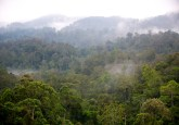 Morning mist in Gunung Halimun-Salak National Park, Java, Indonesia.  Mokhamad Edliadi/CIFOR photo