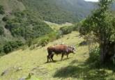 Un programa en las cabeceras de la Amazonia paga a propietarios de tierras aguas arriba para que protejan un río, compensándolos así por los ingresos que habrían recibido por la expansión de la agricultura, la ganadería o la explotación forestal. Foto CIFOR