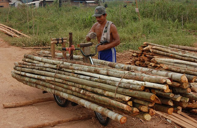 Not only does selective logging maintain a forest structure, but also a logged tropical forest can remain a biologically rich forest.