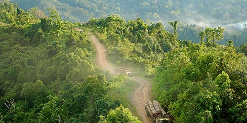 Truk sarat muatan kayu di Gunung Lumut, Kalimantan. Sebuah penelitian dekat perkebunan bubur kertas di Sumatera membantu meringankan konflik penggunaan lahan dan memberi manfaat terhadap masyarakat lokal dan perusahaan perkebunan. Foto @CIFOR