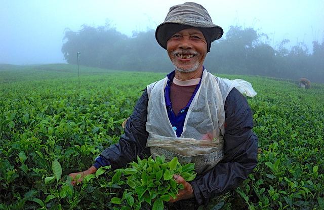 Pemetik teh di desa Cianten, dalam batas Taman Nasional Halimun Salak di Jawa Barat, mengumpulkan daun-daun teh ke dalam keranjang.  Memulai hari sejak pukul 6 pagi, para pemetik teh menyelesaikan tugasnya pada pukul 10 pagi, tetapi kebanyakan dari mereka tidak memiliki sumber penghasilan yang lain.  ©Center for International Forestry Research/Aulia Erlangga