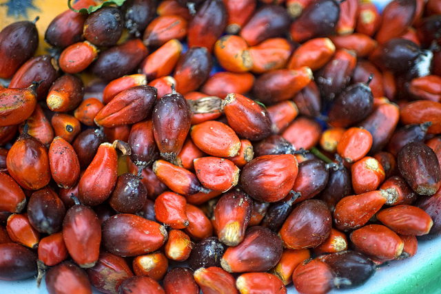 Artisanal millers vs. industrial plantations in Cameroon's palm oil paradox