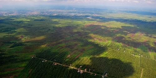 Lanskap pedesaan di Kalimantan Barat. Yayan Indriatmoko/CIFOR photo