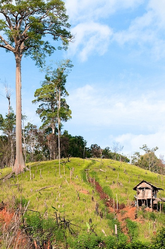 Hutan bertemu tanah pertanian di Gunung Lumut, Kalimantan. Perbatasan antara kedua sektor jarang bersifat sedemikian nyata, dan kebijakan tata guna lahan perlu lebih lentur dalam penyesuaiannya, ujar salah satu pakar utama. Foto @ CIFOR