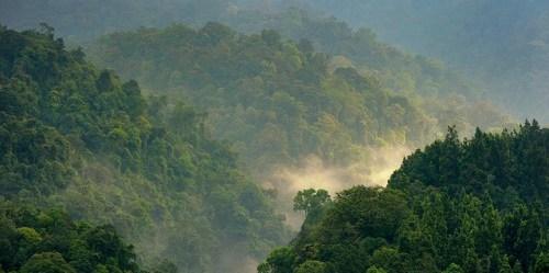Hutan Gede Pangrango, Jawa Barat, Indonesia. Tulisan terbaru mengenai peran hutan dalam perubahan iklim tidak sejalan dengan telaah ilmiah, tulis pakar CIFOR. Ricky Martin/CIFOR photo