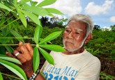 A cassava farmer checks his crops in the Juma Reserve, part of the Brazilian Amazon.