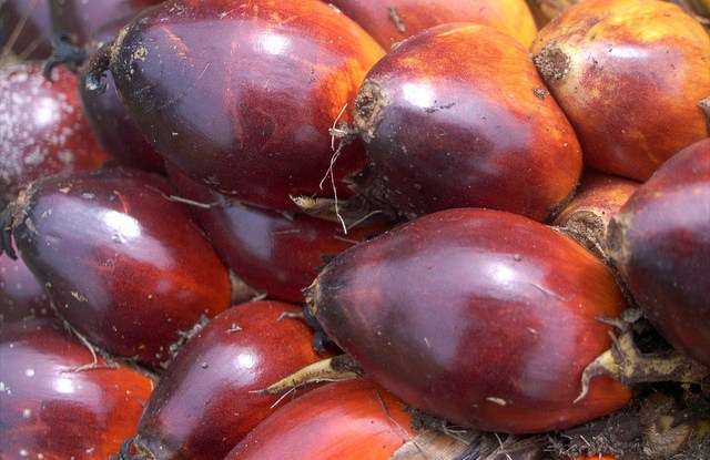 Nearly 18 million hectares of land in the tropics have been planted with oil palm — an area roughly the size of Cambodia.