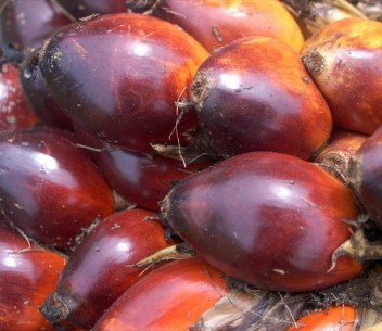 Development miracle or environmental disaster? A look behind the oil palm controversy