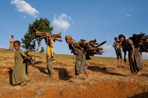 "Ethiopian women and children usually spent hours for collecting firewood. A reduction of this hard work is a positive side effect of the ""Mirt"" stoves in the Kafa Biosphere Reserve.  Foto: Bruno D'Amicis"