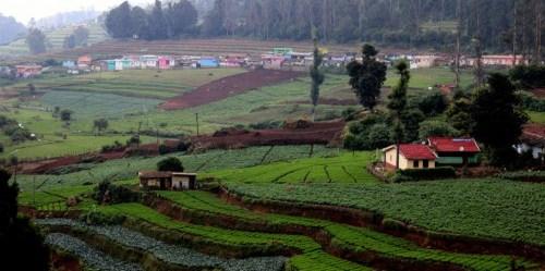 Pertanian tumpang sari dan bentang alam hutan di Cagar Biosfer Nilgiri, Tamil Nadu, India. Riset tengah berlangsung untuk menentukan apa—dan bagaimana—pendekatan bentang alam bekerja di kehidupan nyata. Foto: Deepak Dhyani