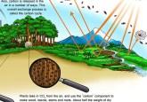 Cuplikan dari sebuah poster yang dirancang untuk mengajar tentang karbon dan perubahan iklim. LIHAT POSTER TERSEBUT SECARA MENYELURUH DI SINI.