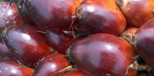 """Scientist: """"The problem is not the oil palm but the way people have chosen to exploit it."""""""