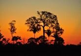 Sunset in Mato Grosso, Brazil. Icaro Cooke Vieira/CIFOR photo