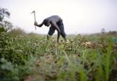 Un agricultor desentierra papas en Kongoussi, Burkina Faso.  Las reformas en la tenencia de la tierra en África no han aumentado realmente los ingresos ni la productividad como en América Latina y Asia. Foto: Ollivier Girard / CIFOR