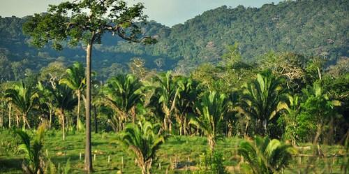 Kontribusi bersama dari sektor pertanian dan juga kehutanan, akan memainkan peran besar dalam mencapai SDG dan menangani perubahan iklim. Icaro Cooke Vieira/CIFOR