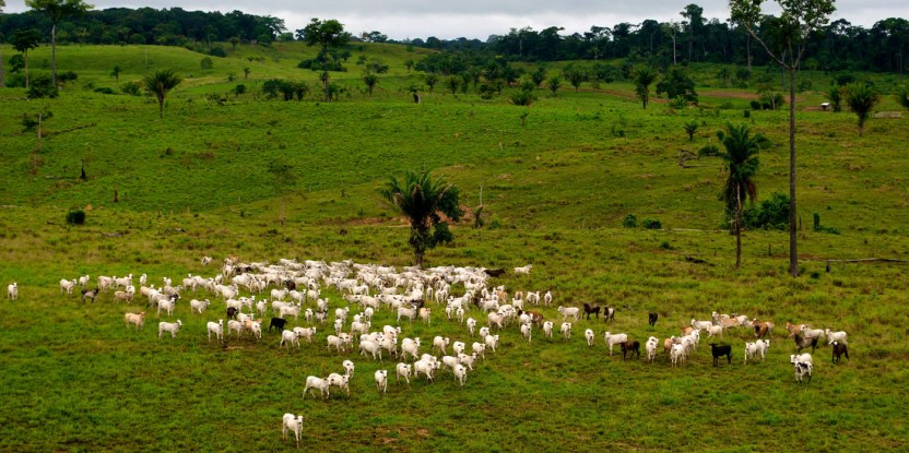 Cattle farming is a major driver of deforestation in Brazil. Landscape near Rio Branco, Acre, Brazil