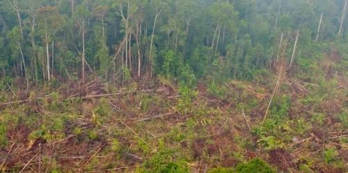 Bila berhasil, Deklarasi New York tentang hutan dapat mencegah — menurut pernyataan tindakan dari deklarasi tersebut — antara 4,5 miliar dan 8,8 miliar ton metrik emisi karbon per tahun pada 2030. Aulia Erlangga/CIFOR photo
