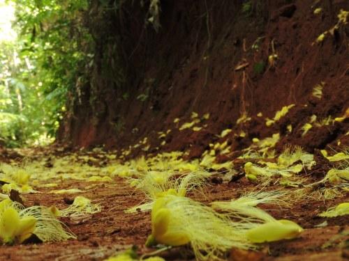 Expertos piden mayor rigor científico en los esquemas de pagos por servicios ambientales