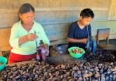 Extracción de castañas en Madre de Dios. Foto Gabriela Ramirez Galindo, CIFOR.