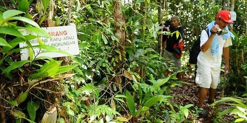 Taman anggrek Selimbau di danau Sentarum, Kalimantan Barat. Dibangun atas inisasi CIFOR dan masyarakat lokal. Ramadian Bachtiar/CIFOR