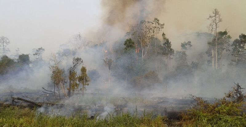 Fires in forests and former forestlands occur in the dry season every year in Riau, Sumatra. Most fires are deliberately lit. Some then escalate and get out of control. CIFOR