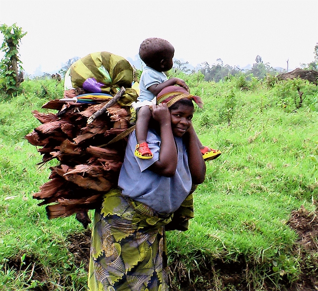 REDD+: The implementation challenge in the Congo Basin